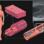 Cherry_Biotech_liver_biopsy_on_chip_2-300x235