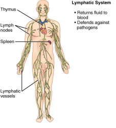 CherryBiotech-system-of-the-body-figure-8-lymphatic-and-immunitary-systems