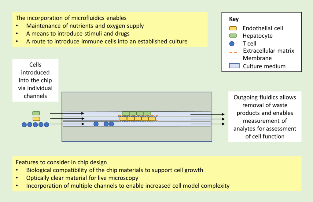 Read more about the article Organ-on-chip applications in drug discovery: an end-user perspective